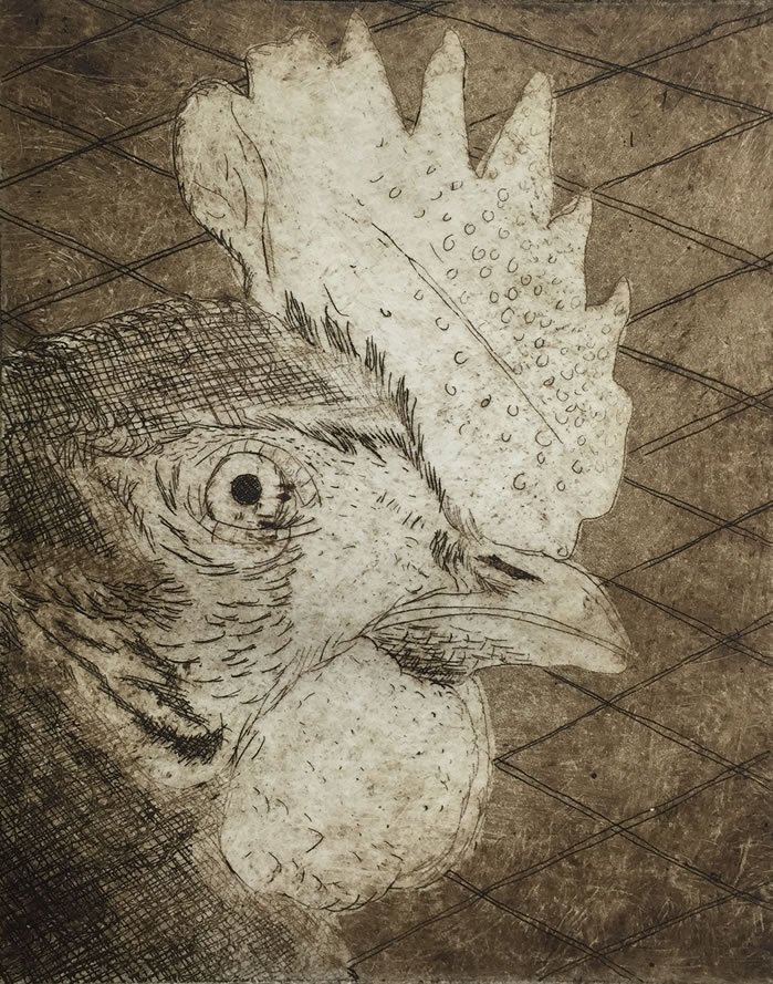 Rooster Etching